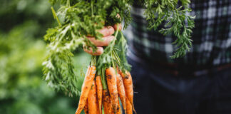 Important and lovely facts about Carrots