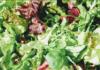 Many importance benefits of lettuce