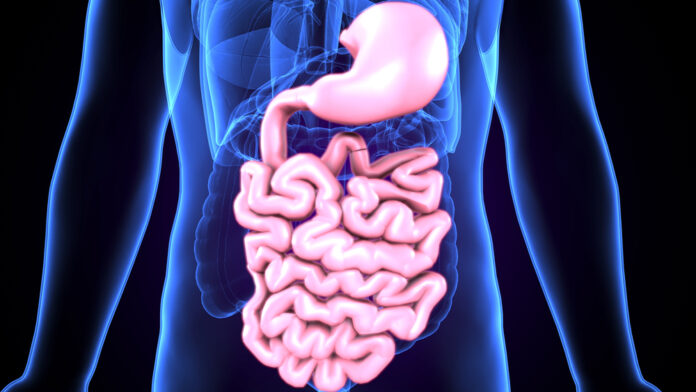 Human Digestive System, Stomach and Intestines