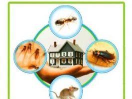 Pest Control Service in Chennai